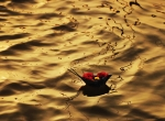 Sanjay Kanojia:AFP:Getty Images.jpg
