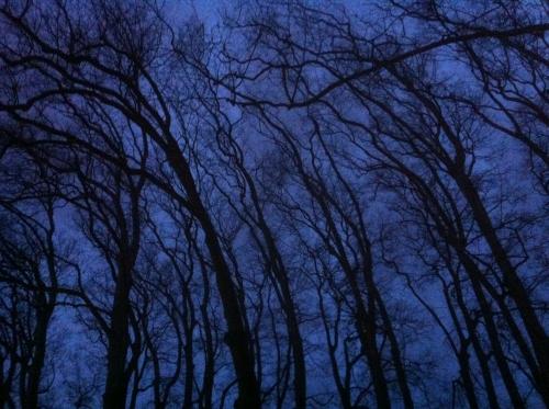 arbres-dans-la-nuit_12047151944_o.jpg