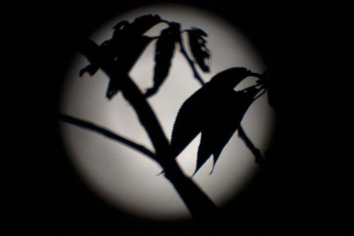 lune-de-prige-superbe-hier-soir-constituant-un-fonds-lumineux-assez-pratique-au-catadioptrique-de-500-mm_14881618711_o.jpg